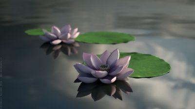 Fiori di loto – Blender